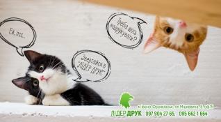 Lider cats